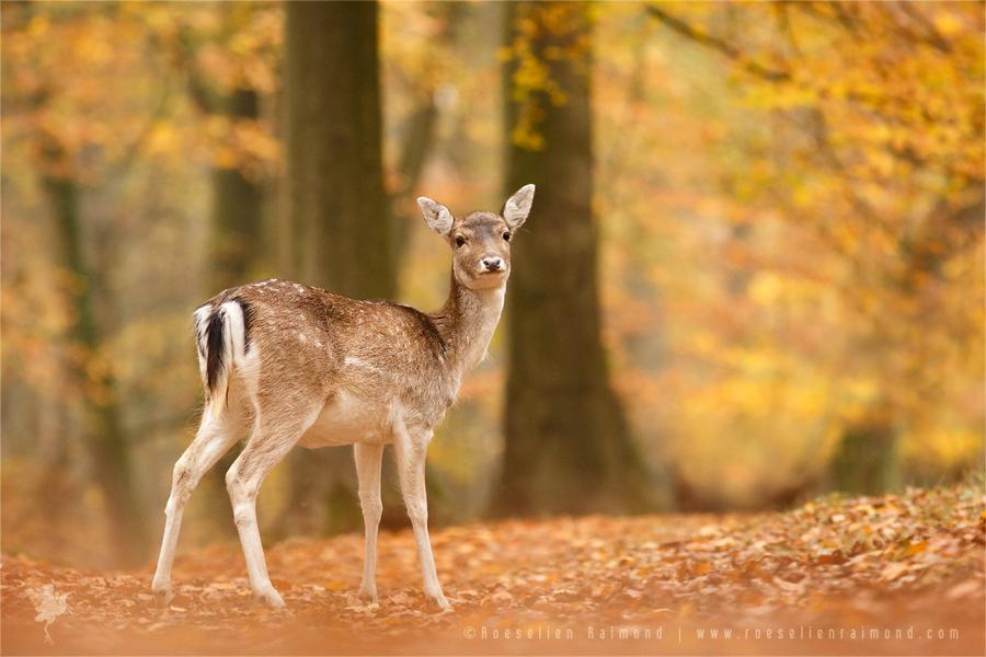 autumn von doe
