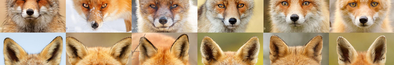 slider_fox_faces