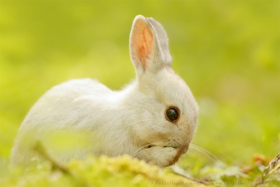 Cute Rabbits Chasing White Rabbits
